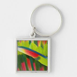 Amazon Parrot Feather Still Life Key Ring