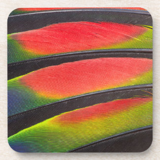 Amazon parrot feathers beverage coasters