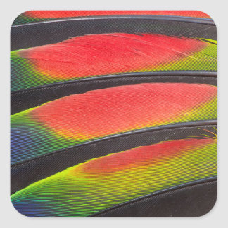 Amazon parrot feathers square sticker