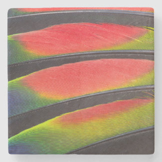 Amazon parrot feathers stone beverage coaster