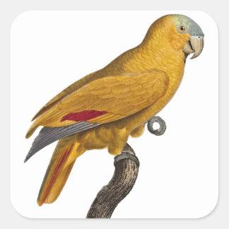 Amazon parrot square sticker