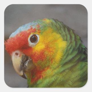 Amazon Parrot Sticker