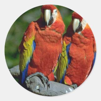 Amazon parrots round stickers