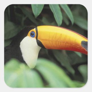 Amazon Rain Forest. Square Sticker
