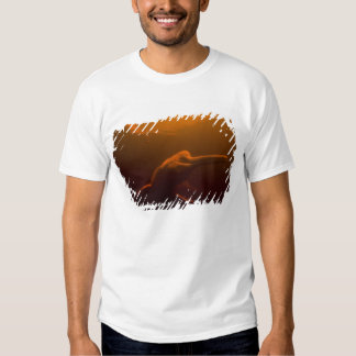 Amazon River Dolphin (Inia geoffrensis) or Boto, Tee Shirts