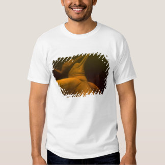 Amazon River Dolphins or Botos (Inia 2 T Shirts