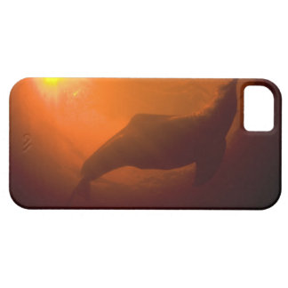 Amazon River Dolphins or Botos (Inia iPhone 5 Covers