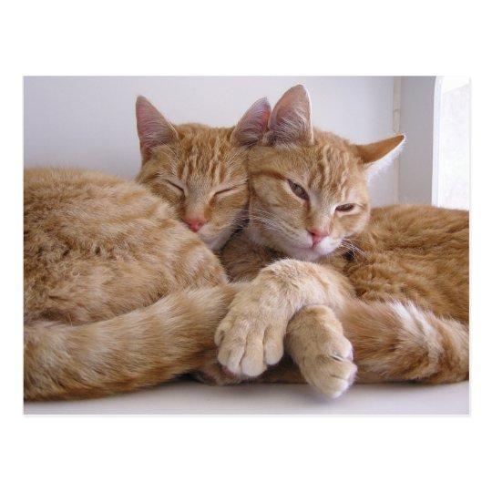 Amber & Topez Postcard