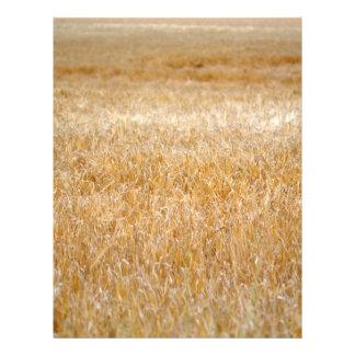Amber Waves of Grain Full Color Flyer