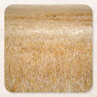 Amber Waves of Grain Square Paper Coaster