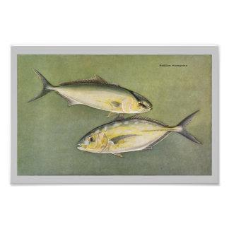 Amber & Yellow Jack Vintage Fish Print