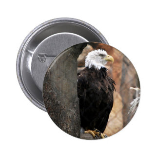 amerian eagle buttons
