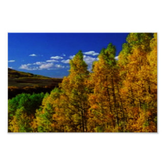 America Tree Line Olympic National Park treeline Poster