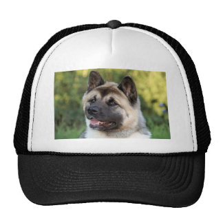 American Akita Dog Cap