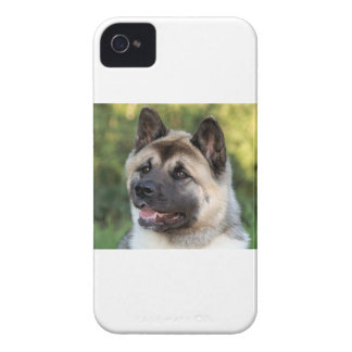 American Akita Dog iPhone 4 Cases
