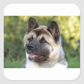 American Akita Dog Square Sticker
