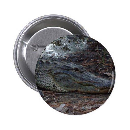 American Alligator Button