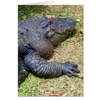 American Alligator Card