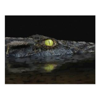 American Alligator Postcards