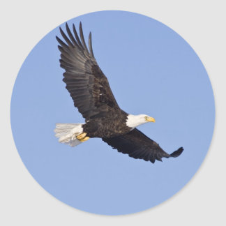 American Bald Eagle Classic Round Sticker