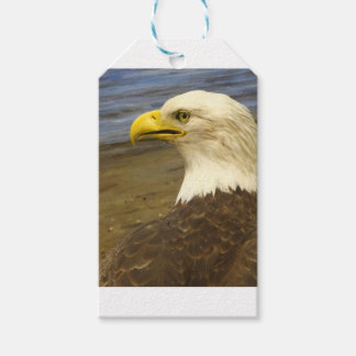American Bald Eagle Gift Tags