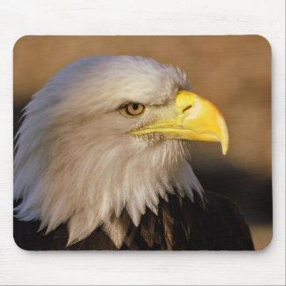 American Bald Eagle Mouse Pad