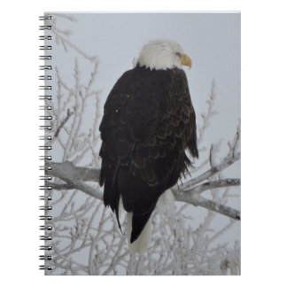 American Bald Eagle Notebooks