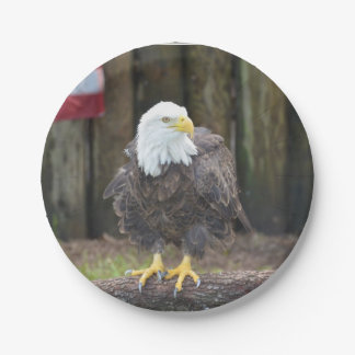 American Bald Eagle Perched on a Log Paper Plate