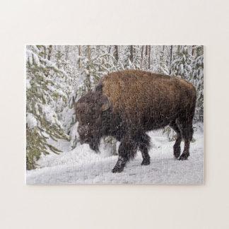 American Bison (Bison bison) Puzzle