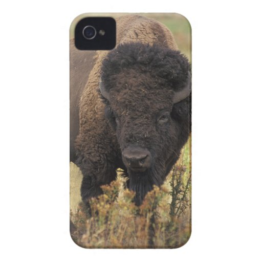 American Bison Blackberry Bold Barely There Case Blackberry Bold Cases