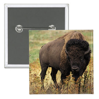 American Bison Buttons