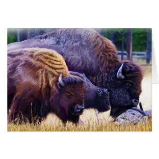 American Bison Family Card