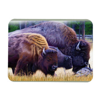 American Bison Family Magnet