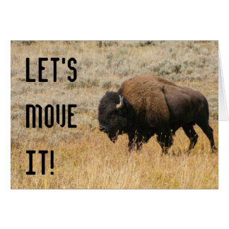 American Bison Grazing In Meadow Grass Photograph Card