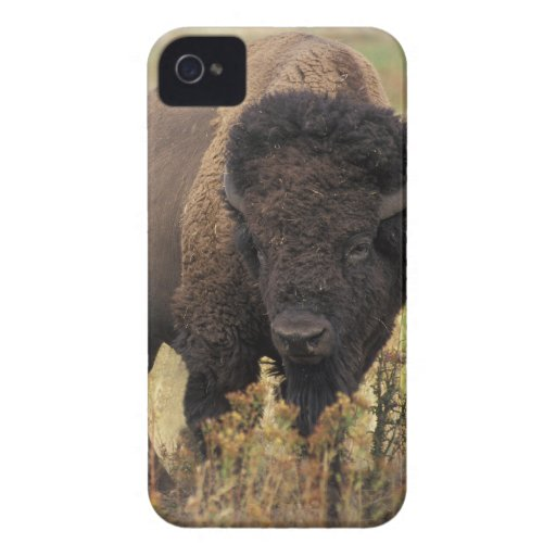 American Bison iPhone 4/4S ID Case iPhone 4 Case
