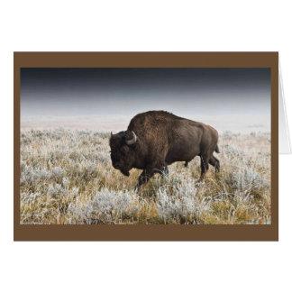 American Bison or Buffalo Card