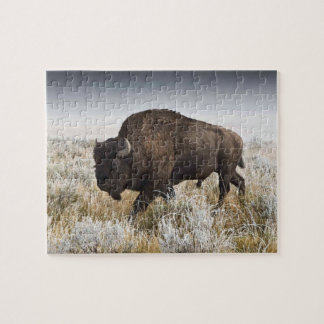 American Bison or Buffalo Jigsaw Puzzle