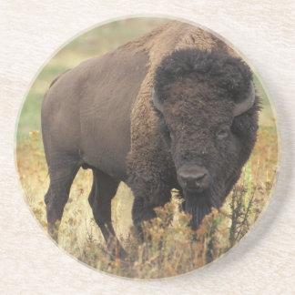 American Bison Sandstone Coaster