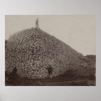 American Bison Skulls to be Ground for Fertilizer Poster
