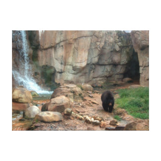 American Black Bear Gallery Wrap Canvas