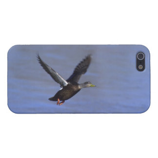 American Black Duck iPhone 5 Cover- Savvy iPhone 5/5S Case