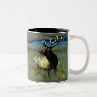 American Bull Elk Two-Tone Coffee Mug