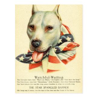 American Bull Terrier, Antique Postcard circa WWI