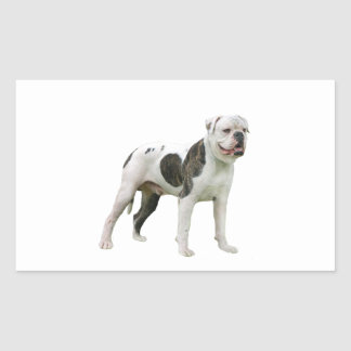 American Bulldog - Brown-White Rectangular Sticker