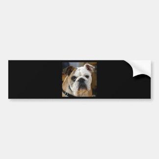 American Bulldog Bumper Sticker