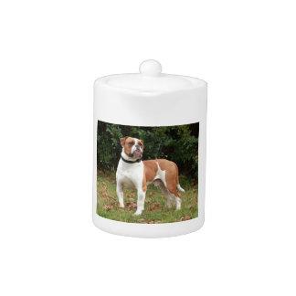 American Bulldog Dog