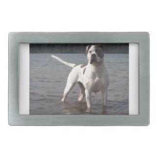 American Bulldog Dog In The Water Rectangular Belt Buckles