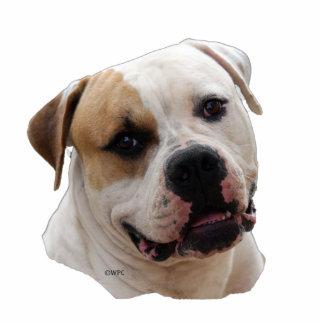 american Bulldog Standing Photo Sculpture