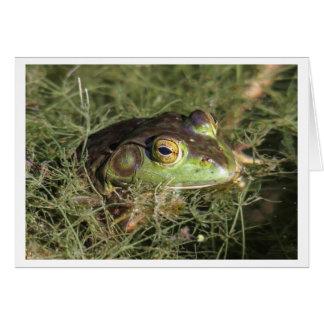 American Bullfrog Card