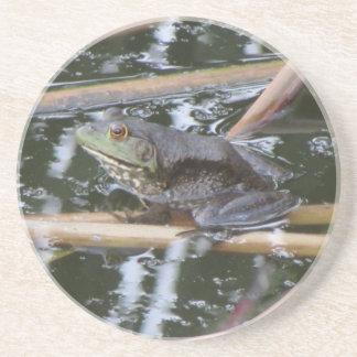 American Bullfrog Coaster